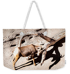 Weekender Tote Bag featuring the photograph Desert Bighorn Ram by Lawrence Burry