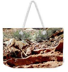 Desert Bighorn Ram Walking The Ledge Weekender Tote Bag
