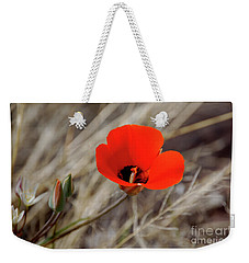 Weekender Tote Bag featuring the photograph Desert Wildflower by Frank Stallone