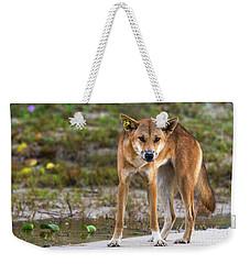 Dingo On 75 Mile Beach, Weekender Tote Bag