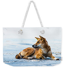 Dingo On Fraser Island Beach Weekender Tote Bag