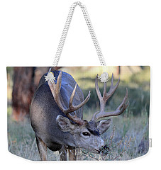 Weekender Tote Bag featuring the photograph Dinner Time by Shane Bechler