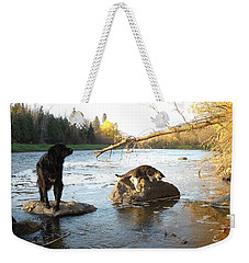 Dog And Cat Exploring Rocks Weekender Tote Bag by Kent Lorentzen