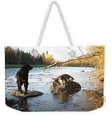 Dog And Cat Exploring Rocks Weekender Tote Bag