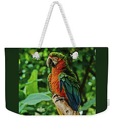 Weekender Tote Bag featuring the photograph Don't Ruffle My Feathers by Marie Hicks