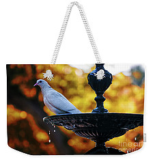 Weekender Tote Bag featuring the photograph Dove On Fountain Genovese Park Cadiz Spain by Pablo Avanzini