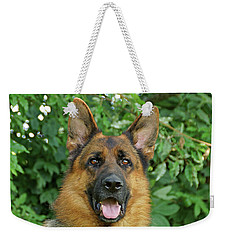 Weekender Tote Bag featuring the photograph Drake by Sandy Keeton
