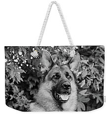 Weekender Tote Bag featuring the photograph Drake Watching by Sandy Keeton