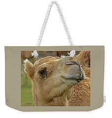 Dromedary Or Arabian Camel Weekender Tote Bag