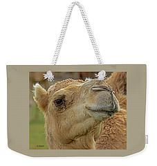 Dromedary Or Arabian Camel Weekender Tote Bag