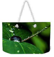 Weekender Tote Bag featuring the photograph Droplets On Stem And Leaves by Darcy Michaelchuk