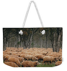 Droving Sheep  At Albert Australia Weekender Tote Bag