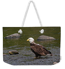 Weekender Tote Bag featuring the photograph Eagle Deep In Thought by Debbie Stahre