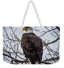 Weekender Tote Bag featuring the photograph Eagle Perched by Paul Freidlund