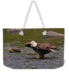 Weekender Tote Bag featuring the photograph Eagle Prepares For Take-off by Debbie Stahre
