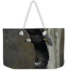 Weekender Tote Bag featuring the photograph Eagle Soaring By Tree by Coby Cooper
