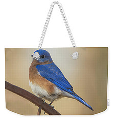 Eastern Blue Bird Male Weekender Tote Bag