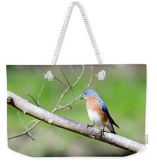 Weekender Tote Bag featuring the photograph Eastern Bluebird by George Randy Bass