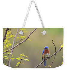 Eastern Bluebird Weekender Tote Bag by Living Color Photography Lorraine Lynch