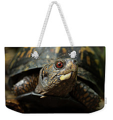 Eastern Box Turtle 4 Weekender Tote Bag
