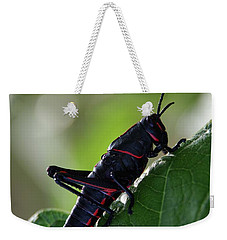 Eastern Lubber Grasshopper Weekender Tote Bag by Richard Rizzo
