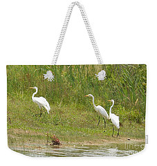 Weekender Tote Bag featuring the photograph Egret Family 1 by Maria Urso