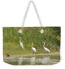 Weekender Tote Bag featuring the photograph Egret Family 2 by Maria Urso