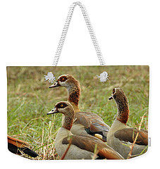 Weekender Tote Bag featuring the photograph Egyptian Geese by Betty-Anne McDonald