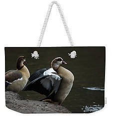 Egyptian Geese Weekender Tote Bag by Matt Malloy
