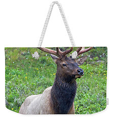 Weekender Tote Bag featuring the photograph Elk 5 by Gary Lengyel