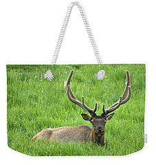 Weekender Tote Bag featuring the photograph Elk 6 by Gary Lengyel