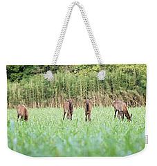 Elk Calves Weekender Tote Bag