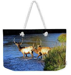 Elk Weekender Tote Bag by Cindy Murphy - NightVisions