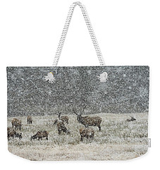 Elk Harem In Falling Snow Weekender Tote Bag