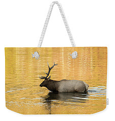 Elk In Golden River Weekender Tote Bag