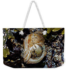 Weekender Tote Bag featuring the photograph Emerging Hermit by Adria Trail