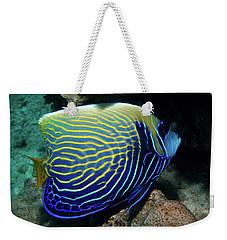 Emperor Angelfish, Red Sea 1 Weekender Tote Bag