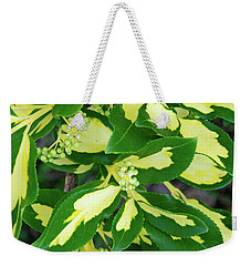 Euonymus Blondy Shrub 2 Weekender Tote Bag