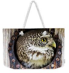 Eurasian Pygmy Owl In Profile Weekender Tote Bag