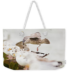 European Herring Gulls In A Row, A Landing Bird Above Them Weekender Tote Bag