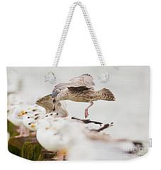 European Herring Gulls In A Row, A Landing Bird Above Them Weekender Tote Bag