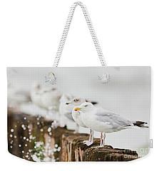 European Herring Gulls In A Row  Weekender Tote Bag