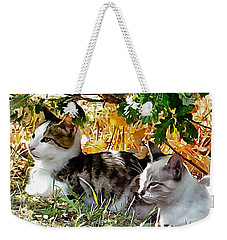Even Kittens Gossip Weekender Tote Bag