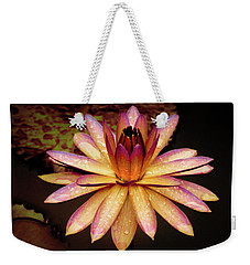 Weekender Tote Bag featuring the photograph Evening Glow Water Lily by Julie Palencia