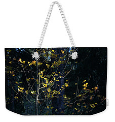 Weekender Tote Bag featuring the photograph Evening Light In November by Ronda Broatch