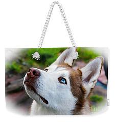 Expressive Siberian  Husky Photo C62017 Weekender Tote Bag