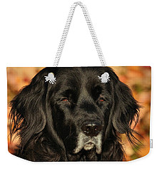 Weekender Tote Bag featuring the photograph Eyes Of Autumn by Debbie Stahre