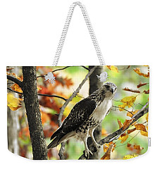 Fall Red-tailed Hawk Weekender Tote Bag