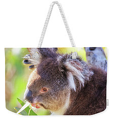 Weekender Tote Bag featuring the photograph Feed Me, Yanchep National Park by Dave Catley