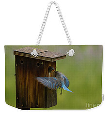 Feeding Time For Bluebirds Weekender Tote Bag by John Roberts